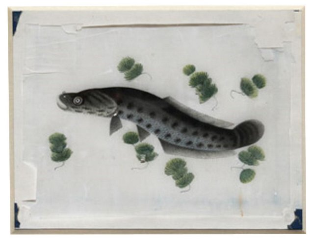 Japanese Watercolor of an Eel