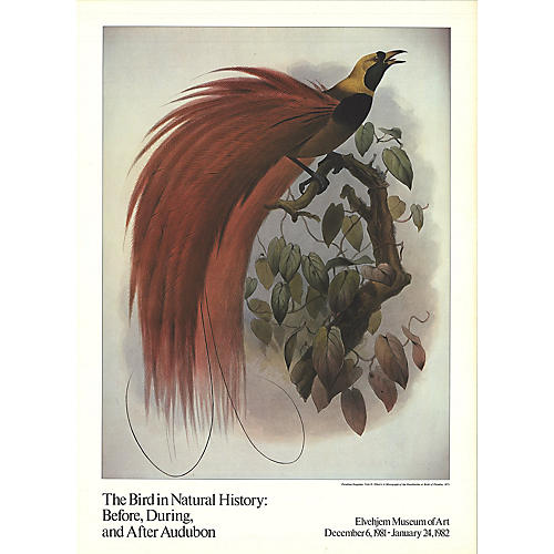 The Bird in Natural History