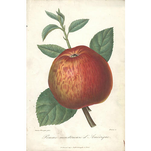 Pomme monstruese d'Amerique by Herincq