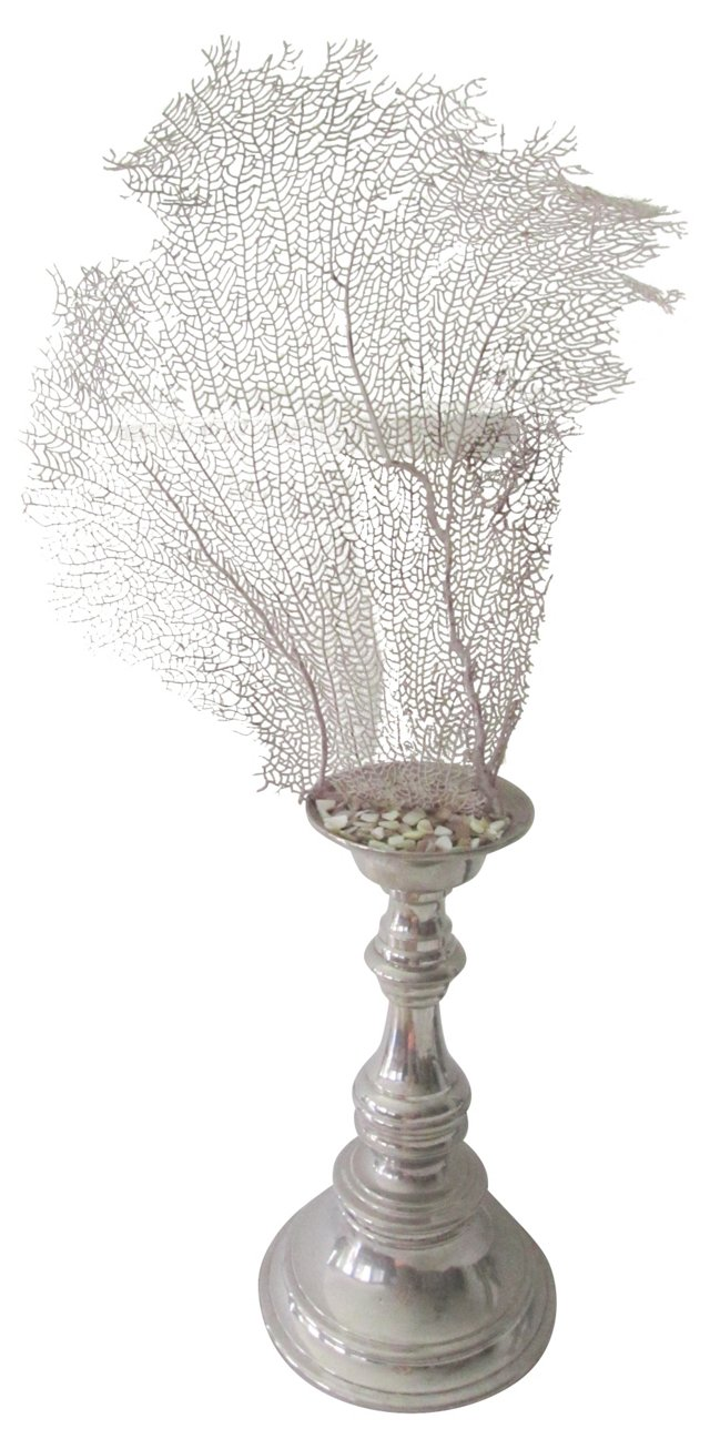 Mounted Sea Fan Specimen