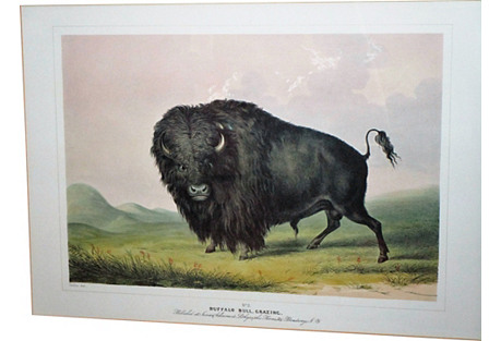 George Catlin Buffalo Bull Grazing