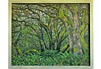 Tree Study, Marin County