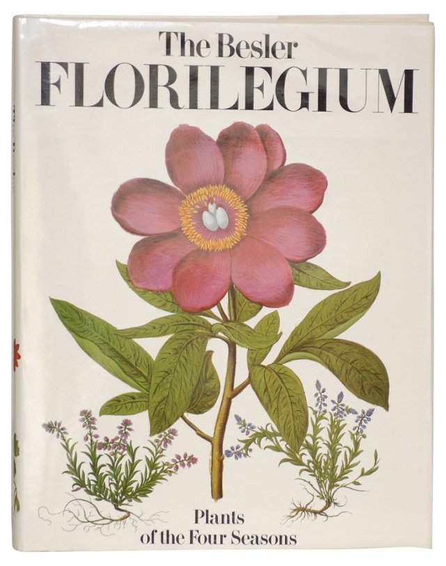 The Besler Florilegium