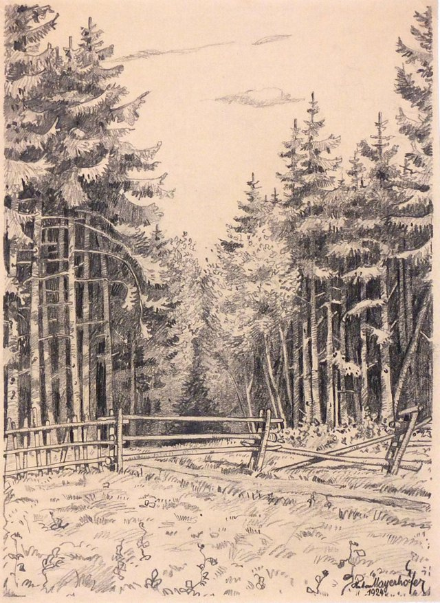 Woods Drawing, 1924