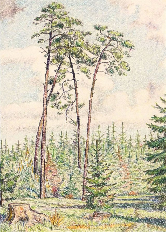 Forest Drawing, 1947