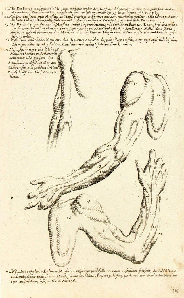 **ReOKL -  Study of the Arm, 1781