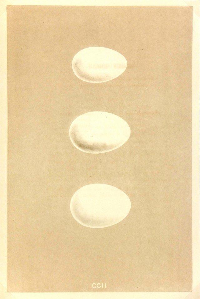 Eggs,              1861