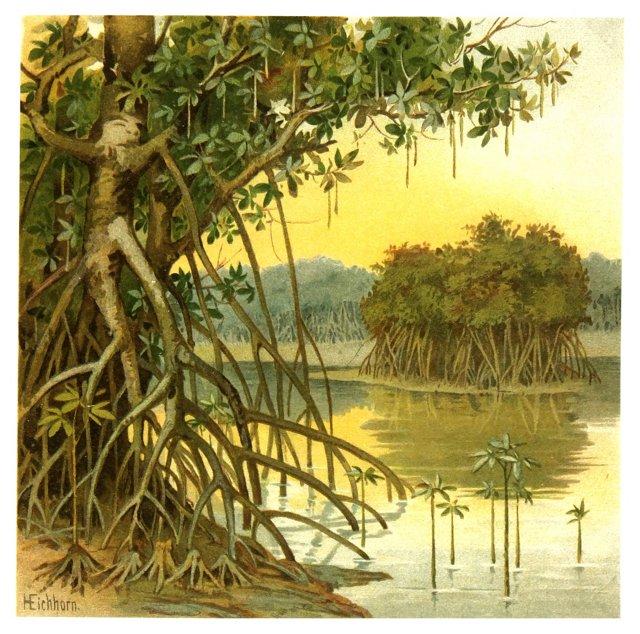 Tropical Wetlands, C. 1880