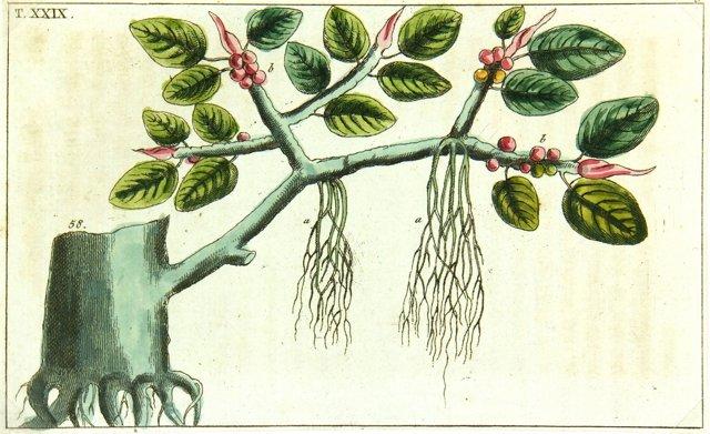 Botanical, C. 1750