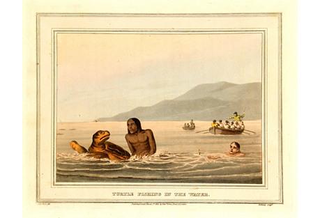 Turtle Fishing, 1813