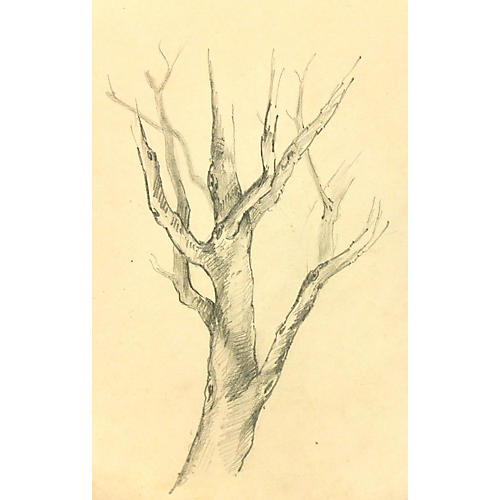Tree Trunk Drawing, C. 1920