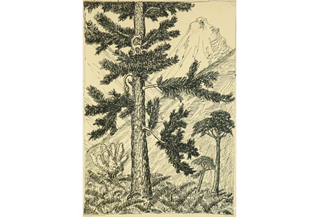 Drawing of Pines, C. 1930