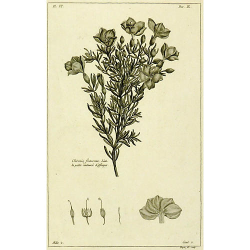 Buchoz Botanical, 1773