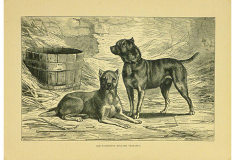 English Terriers, C. 1880