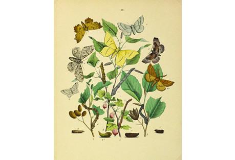 Butterflies, 1882