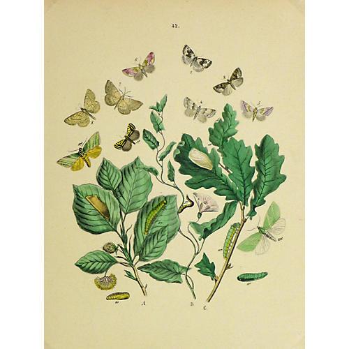 Petits Butterflies, 1882