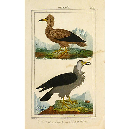 Birds of Prey, C. 1830