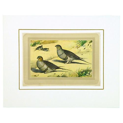 Ptarmigan Bird, C. 1920