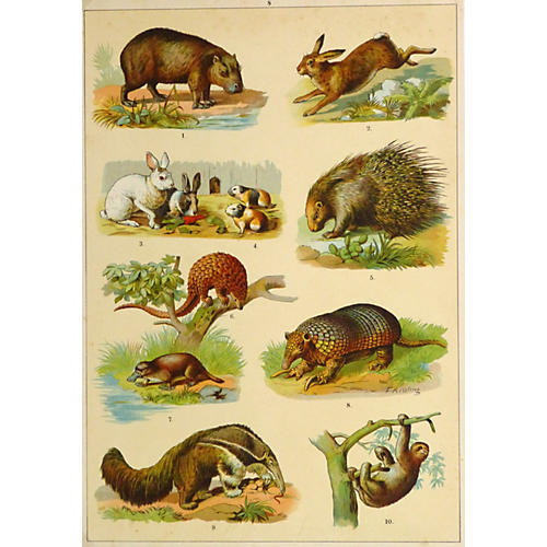 Mammals, 1895