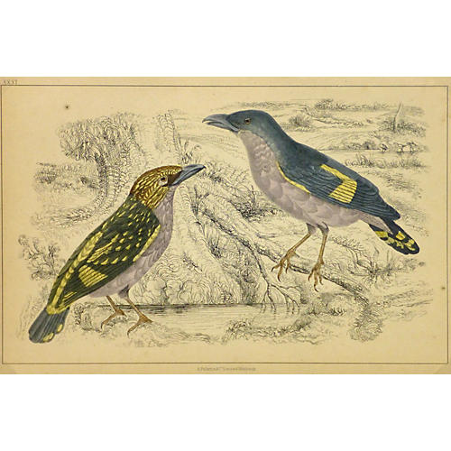 Birds, 1853