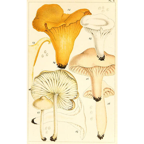 British Edible Mushrooms, 1891