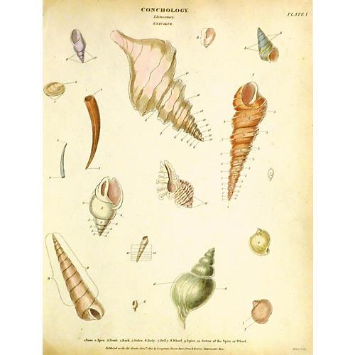 Shells, 1810