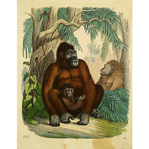 Family of Three Gorillas, 1853