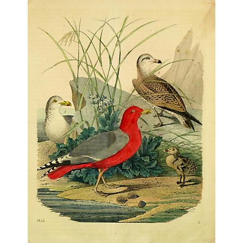 Four Birds, 1853