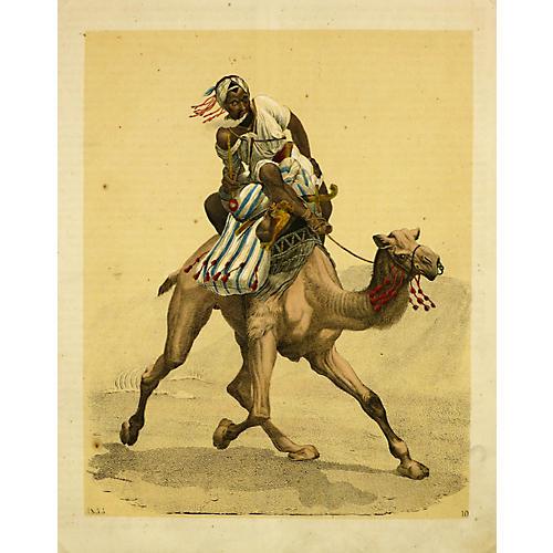 Camel & Rider, 1853