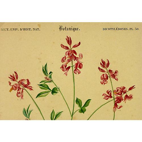 Indigo Flower, C. 1830