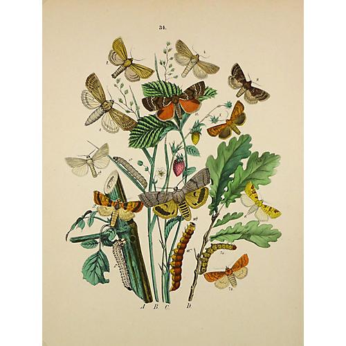 Butterflies, C. 1870