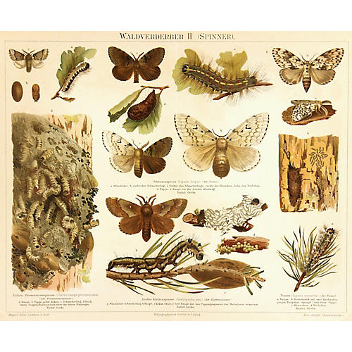 Insects, 1894
