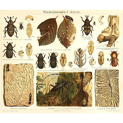 Beetles, 1894