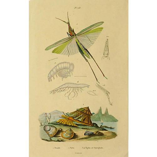 Grasshopper, C. 1840