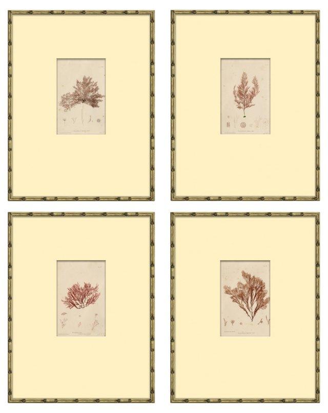 Red   Seaweed    Bradbury, S/4