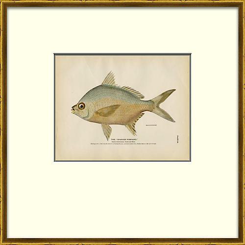 Fish Details
