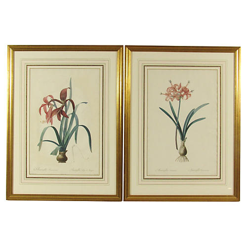 Amaryllis Engravings by Redoute, Pair