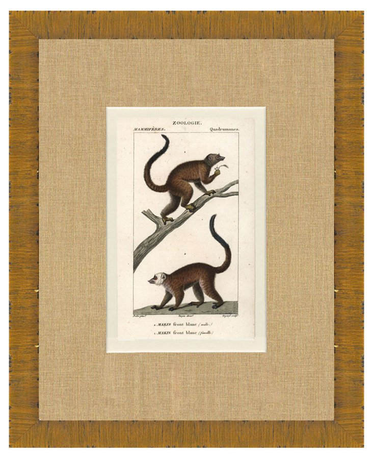 Turpin Monkey Print,   C. 1820