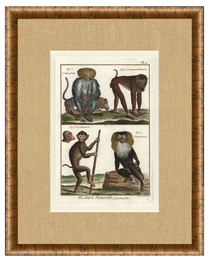 1770s   Monkey     Print