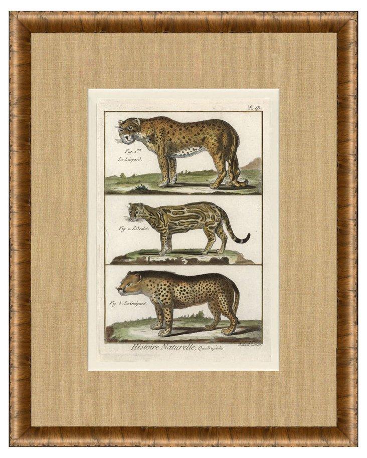 1770s Big Cat  Print