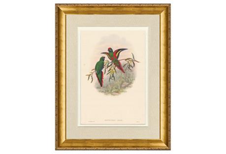 1860s  Gould   Birds