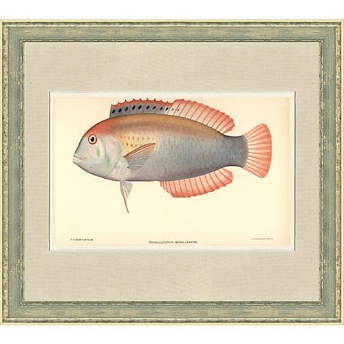 Hawaiian Fish Print by Kako Morita