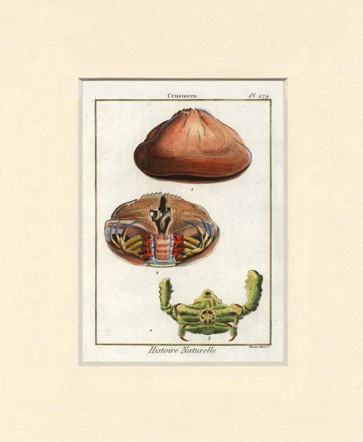 1770s Crustacean Print