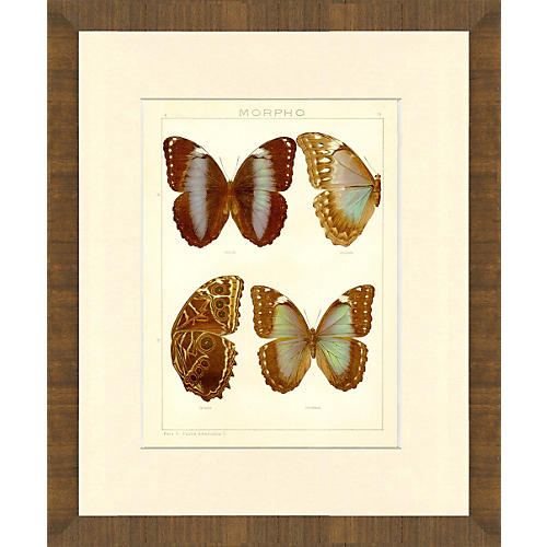 1880s Butterfly Multiples