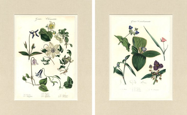 Hand-Colored Botanicals, 1834,   Pair