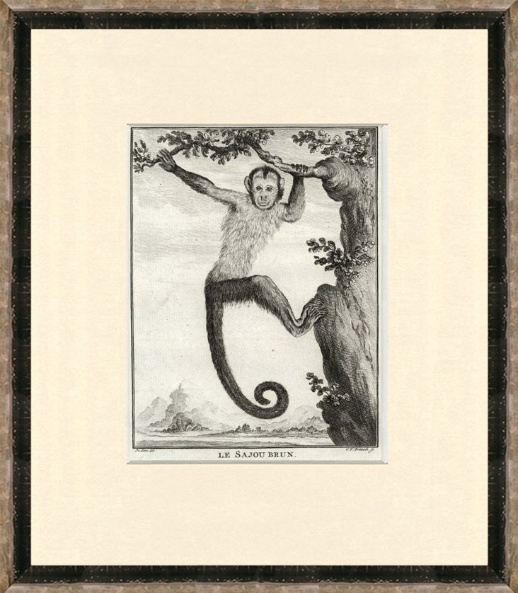 Antique  Monkey Print, 1770