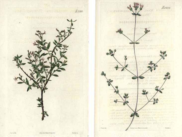 Curtis Floral Prints, C.  1825, Pair