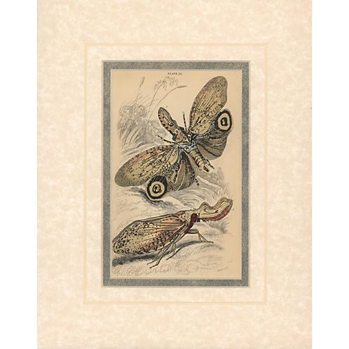 Insect Print I, 1835
