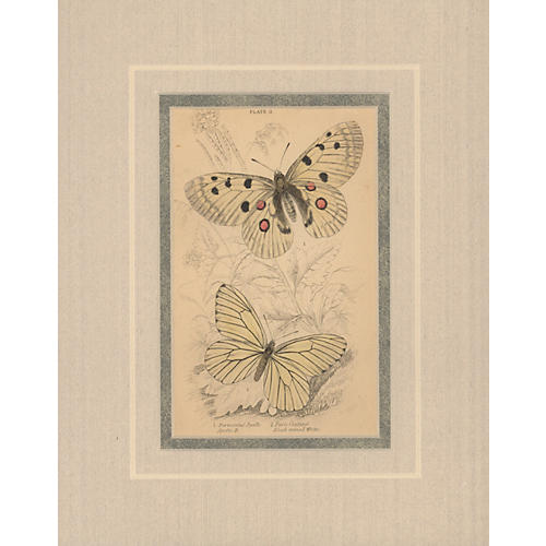 Insect Print II, 1835