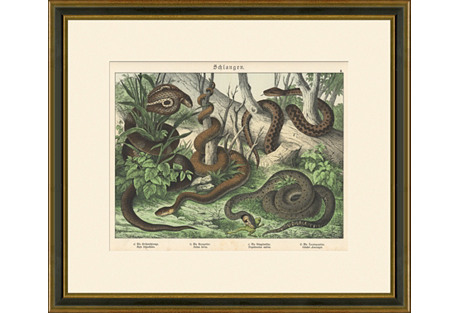 Snakes Print, 1889